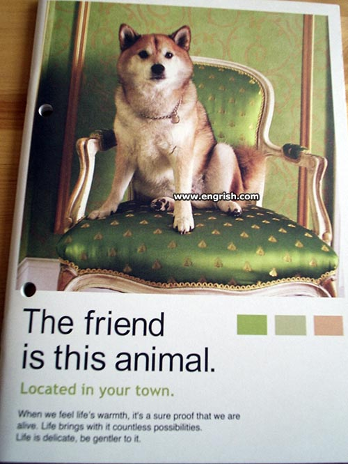 friend-is-this-animal